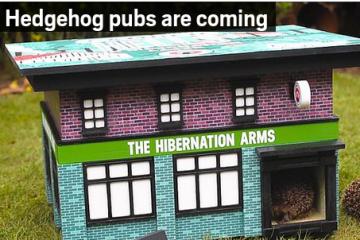 Hedgehog Pub