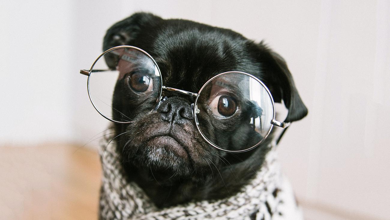 dog-learning