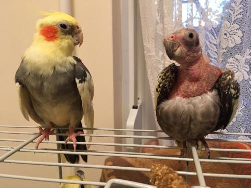 Babi és Bandi
