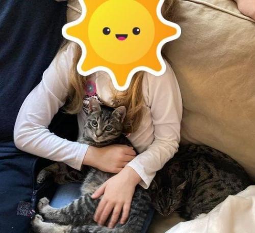 Csicsi és Csibe